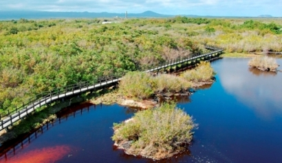 Magroves-Wetlands-and-Lagoons-Isabela-Island
